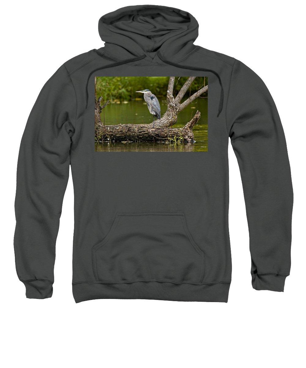 Birds Sweatshirt featuring the photograph Great Blue Heron On Log by Michael Cummings