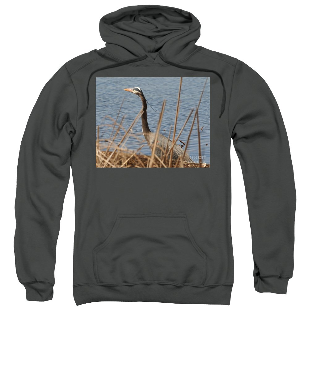 Water Great Blue Herron  Sweatshirt featuring the photograph Great Blue by John Taylor