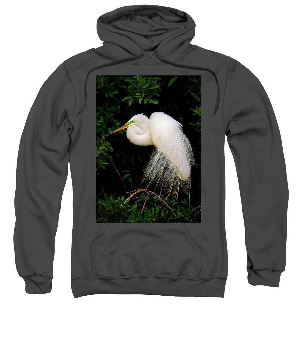Great Egret Sweatshirt featuring the photograph Great Egret by Dennis Goodman