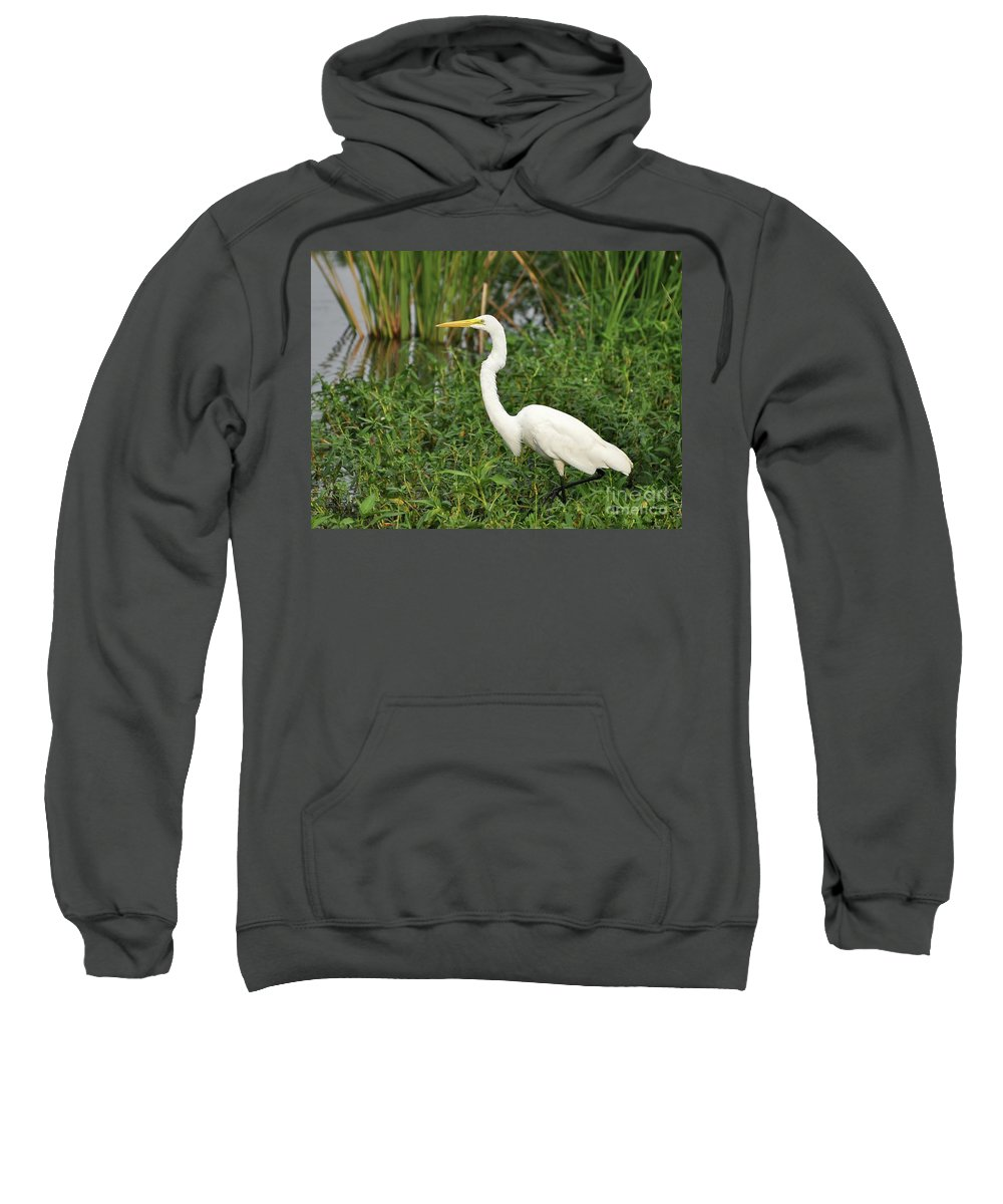 Great Egret Sweatshirt featuring the photograph Great Egret Walking by Al Powell Photography USA