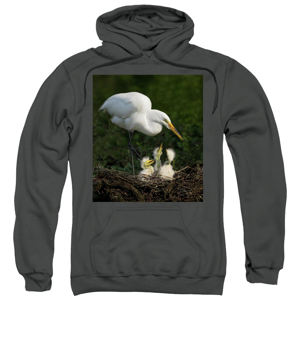 Great Egret Sweatshirt featuring the photograph Great Egret With Chicks by Steve Zimic