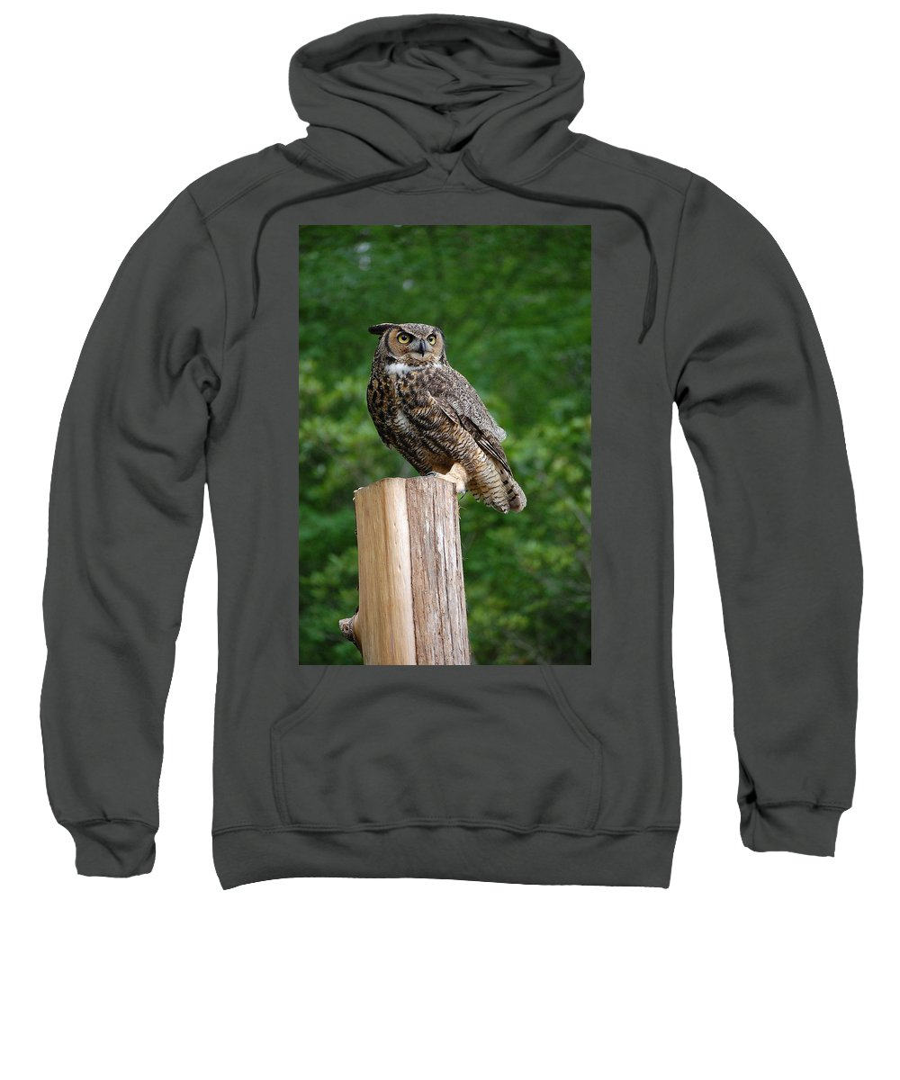 Raptor Sweatshirt featuring the photograph Great Horned Owl by Robert Meanor