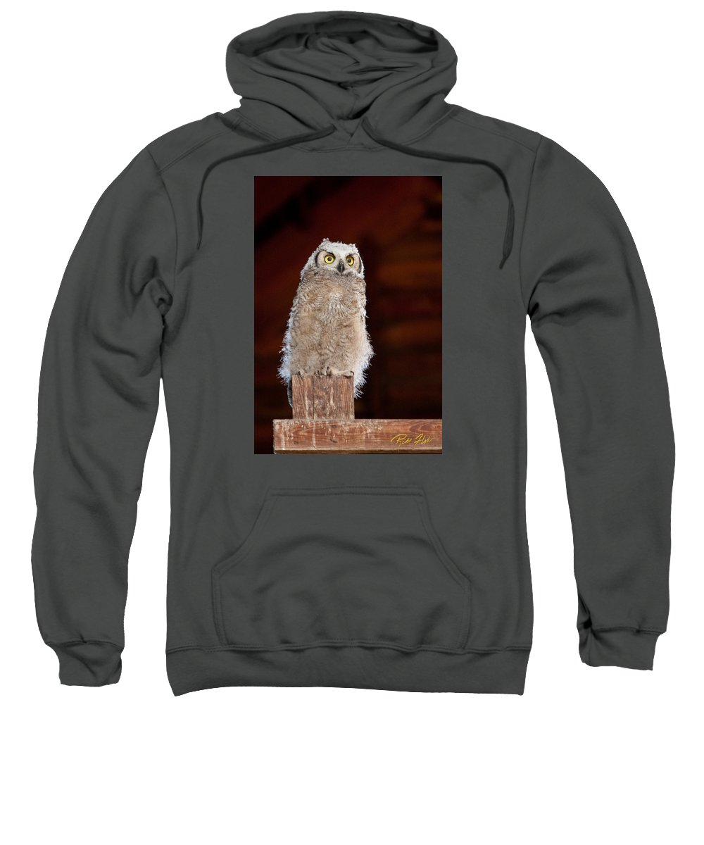 Animals Sweatshirt featuring the photograph Great Horned Owlet by Rikk Flohr