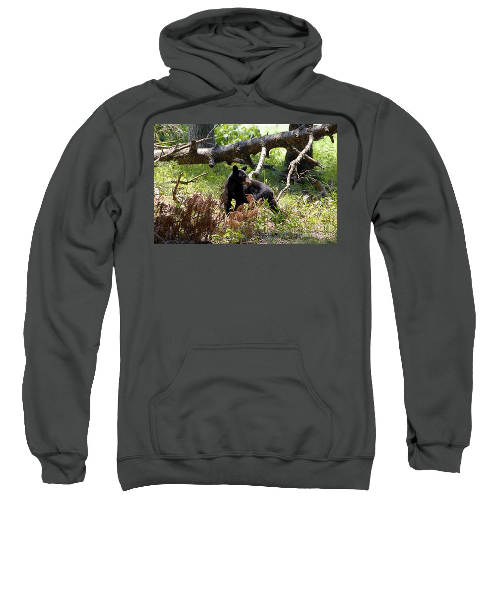 Bear Sweatshirt featuring the photograph Great Smoky Mountain Bear by David Lee Thompson