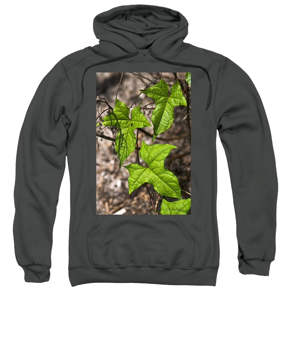 Green Sweatshirt featuring the photograph Green Arrowheads by Christopher Holmes
