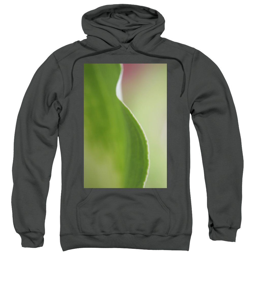 Calla Lilly Zen Green Photography Garden Sweatshirt featuring the photograph Green Calla Lilly by Norah Holsten