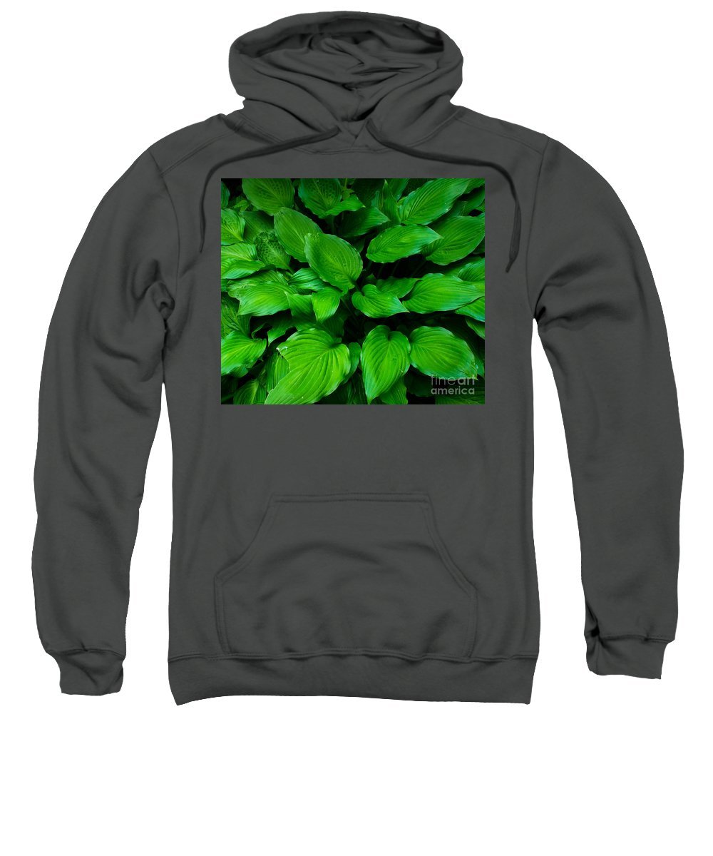Foliage Sweatshirt featuring the photograph Green Foliage by Andrea Anderegg