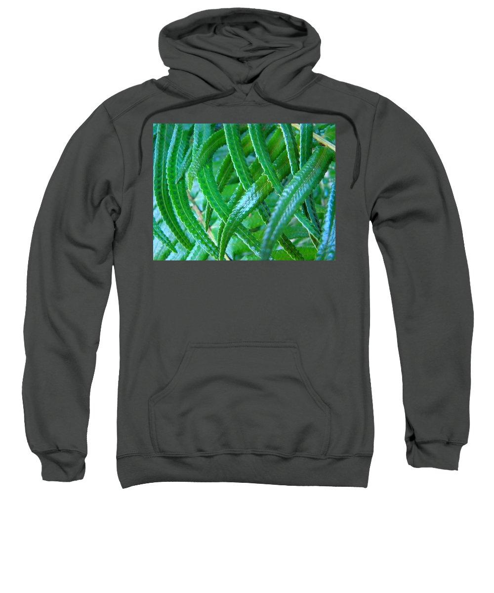 Fern Sweatshirt featuring the photograph Green Forest Fern Fronds Art Prints Baslee Troutman by Baslee Troutman