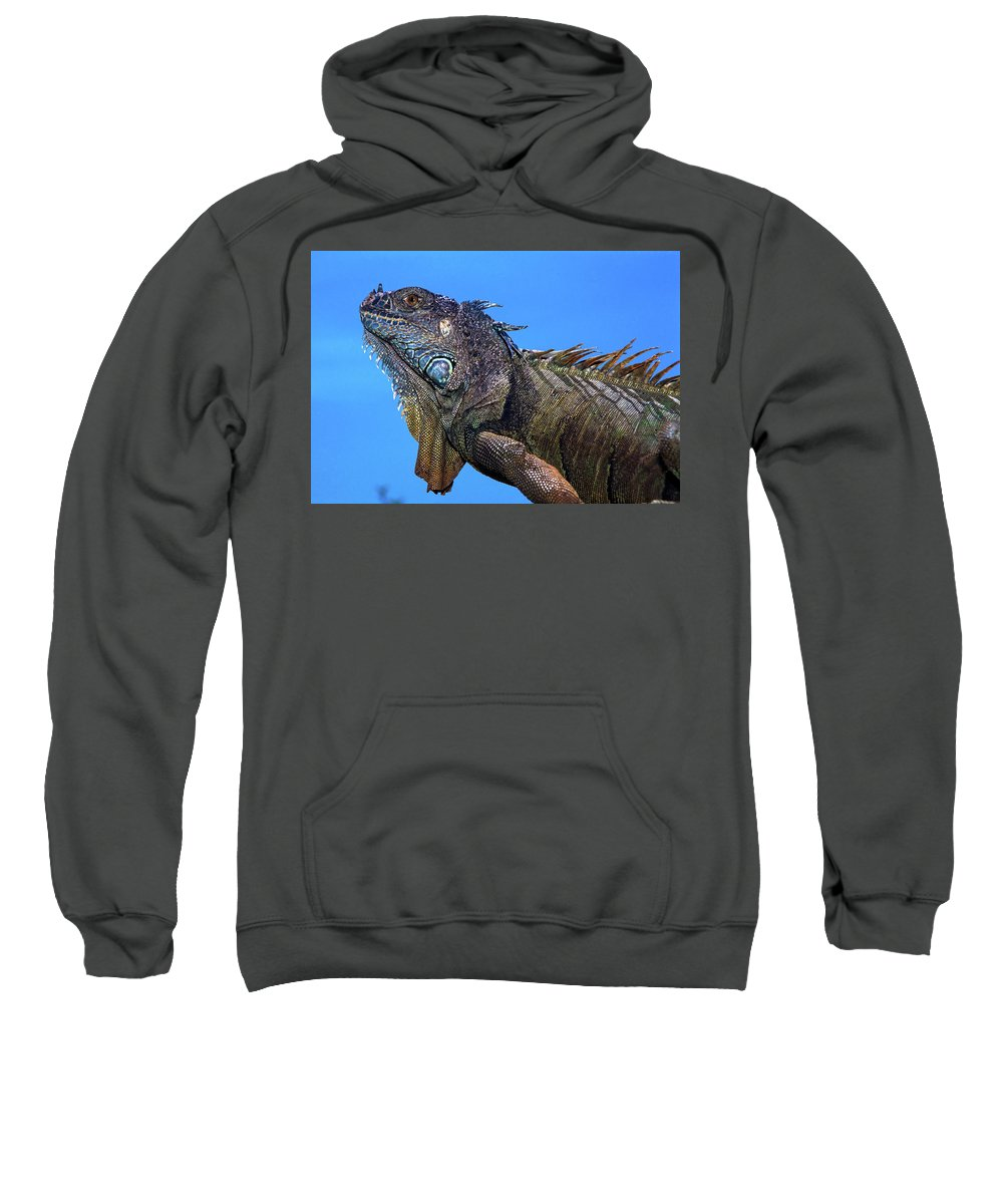 Landscape Sweatshirt featuring the pyrography Green Iguana by Javier Flores