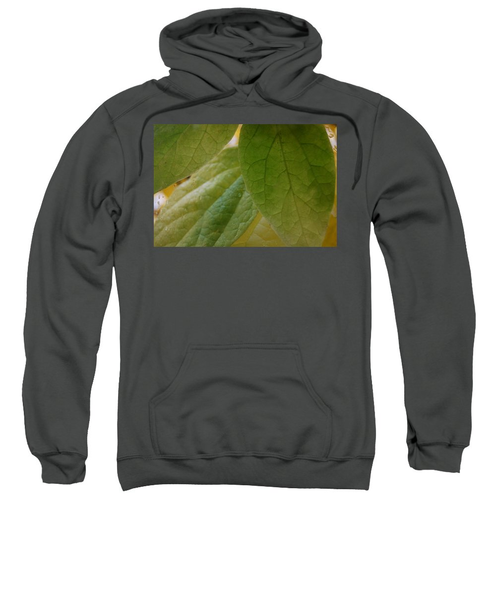 Leaves Sweatshirt featuring the photograph Green In Vein by Trish Hale