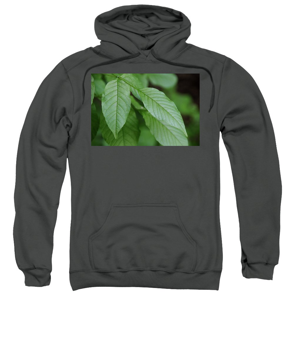 Nature Sweatshirt featuring the photograph Green Leafs by Malik Avunduk