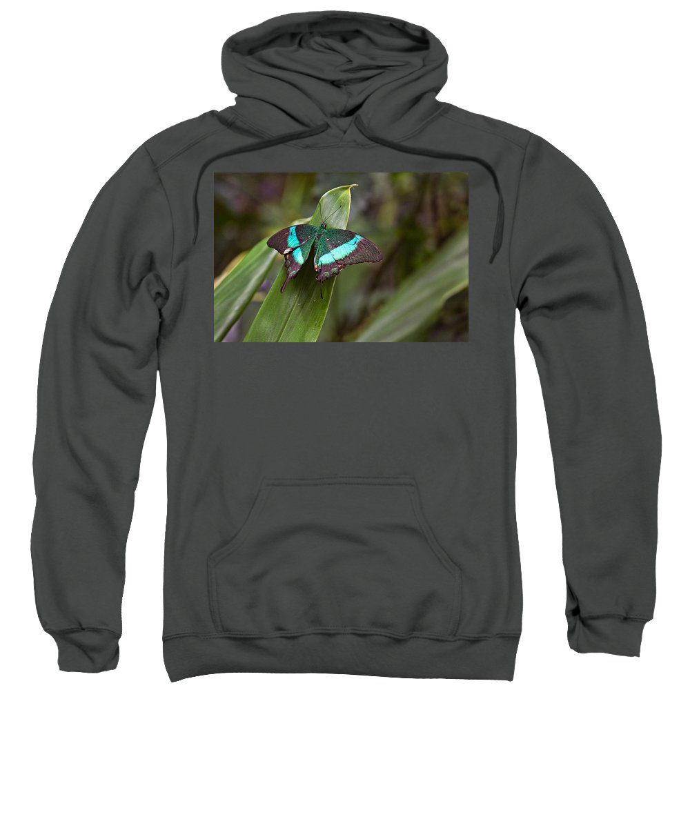 Insect Sweatshirt featuring the photograph Green Moss Peacock Butterfly by Peter J Sucy