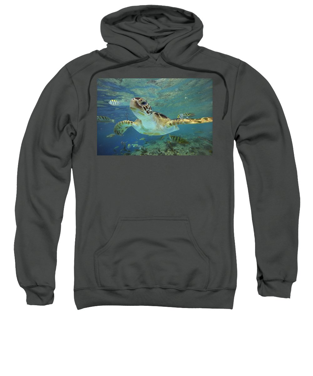 00451418 Sweatshirt featuring the photograph Green Sea Turtle Swimming by Tim Fitzharris