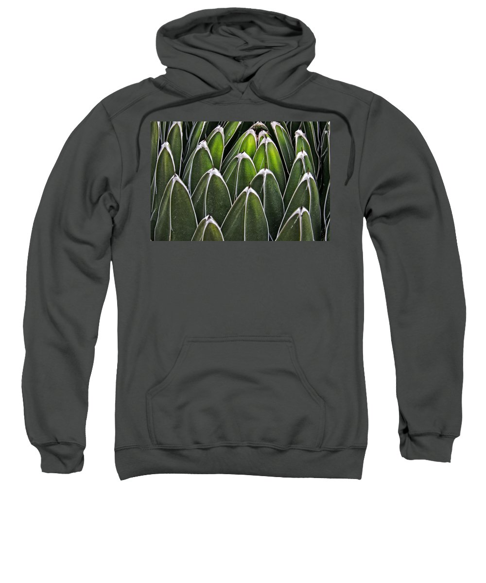 Cactus Sweatshirt featuring the photograph Green Spines by Alice Gipson