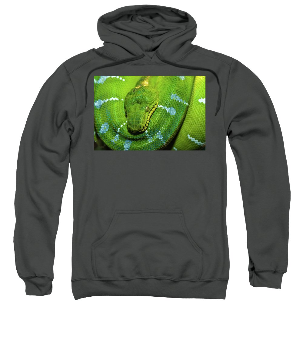 Landscape Sweatshirt featuring the photograph Green Tree Python by Javier Flores
