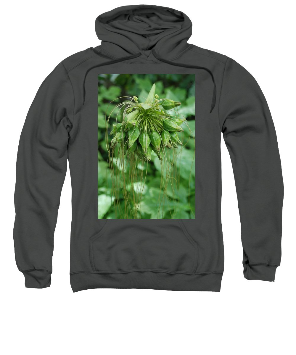 Macro Sweatshirt featuring the photograph Green Vines by Rob Hans