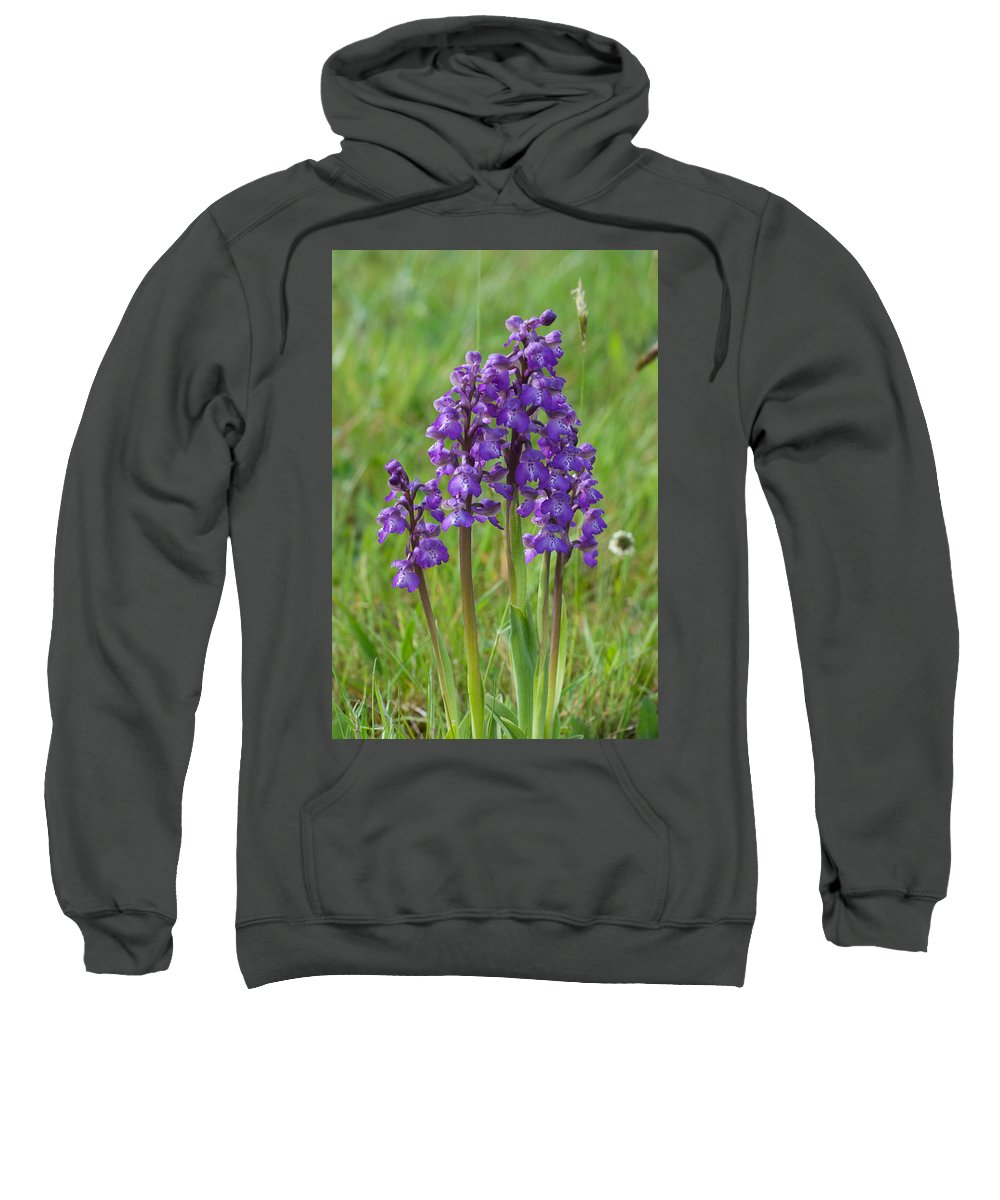 Orchid.flower Sweatshirt featuring the photograph Green-winged Orchids by Bob Kemp