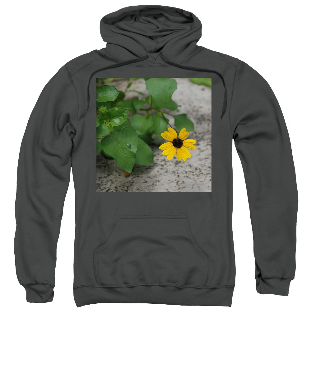 Macro Sweatshirt featuring the photograph Grounded Sunflower by Rob Hans