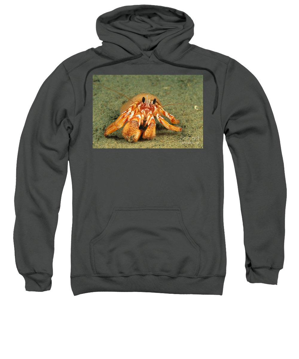 British Sweatshirt featuring the photograph Hairy Hermit Crab by Dave Fleetham - Printscapes