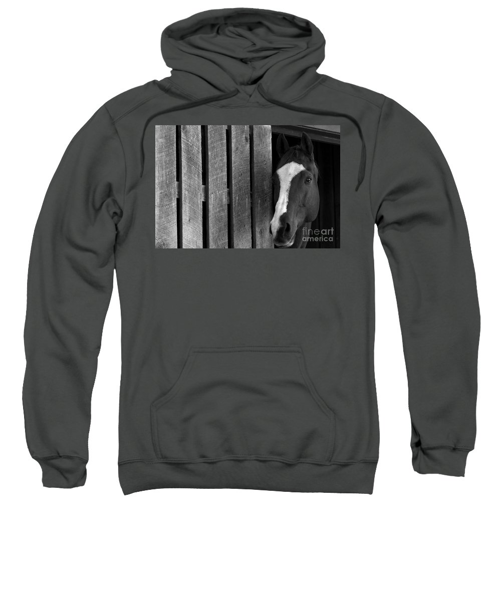 Horse Sweatshirt featuring the photograph Handsome T by Angela Rath