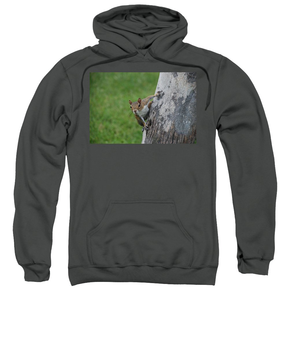 Squirrel Sweatshirt featuring the photograph Hanging On by Rob Hans