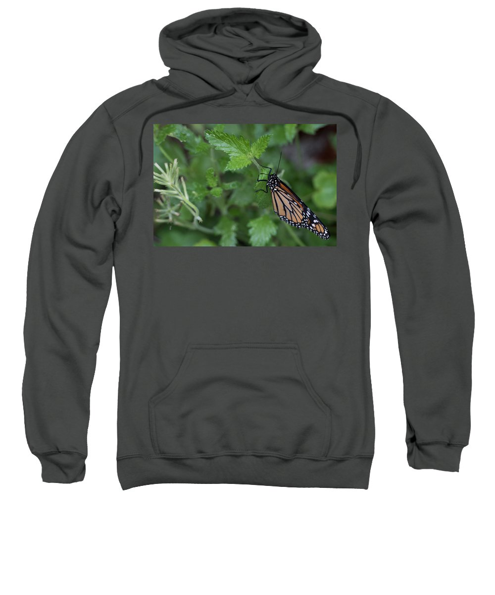 Butterfly Sweatshirt featuring the photograph Hanging On by Wesley Farnsworth