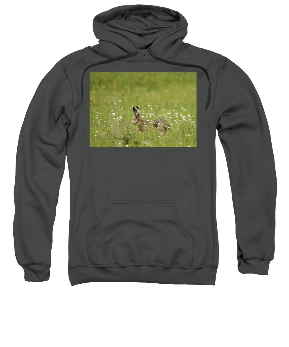 Hares Sweatshirt featuring the photograph Hare On The Run by Cliff Norton