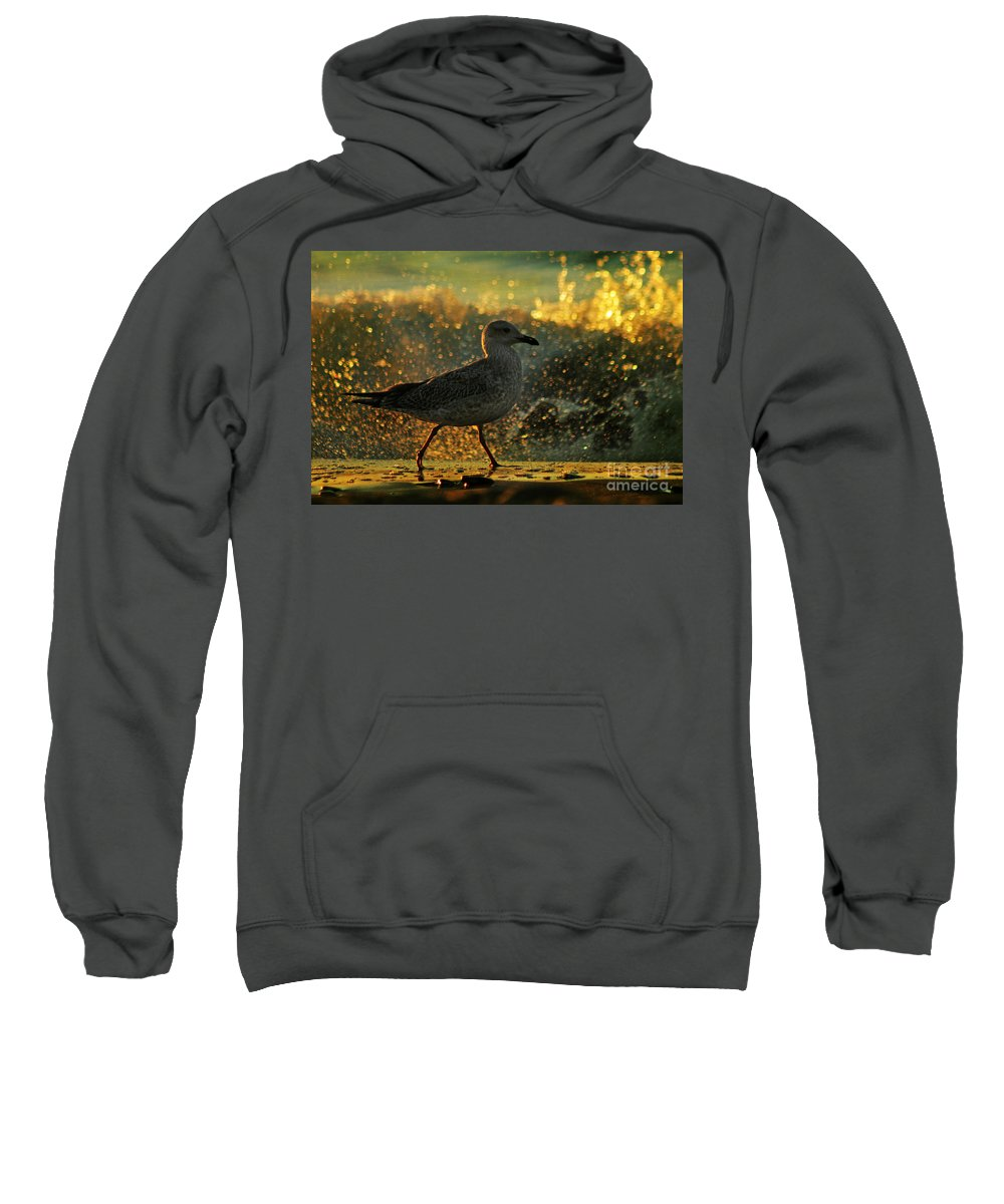 Seagull Sweatshirt featuring the photograph Have A Walk By Th Sea by Angel Ciesniarska