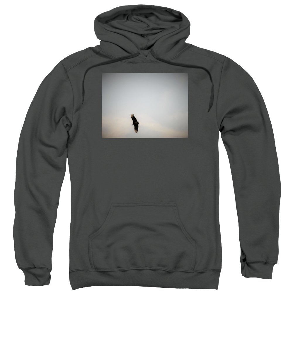 Hawks Sweatshirt featuring the photograph Hawk Circling by Nancy Hopkins