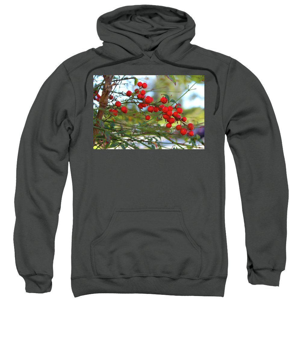 Nandina Sweatshirt featuring the photograph Heavenly Bamboo by Alison Frank