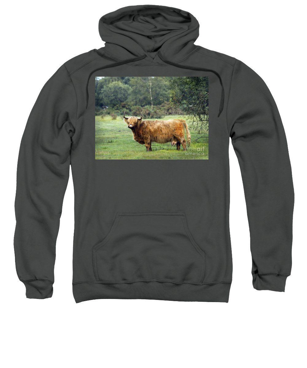 Heilan Coo Sweatshirt featuring the photograph Heilan Coo by Angel Ciesniarska