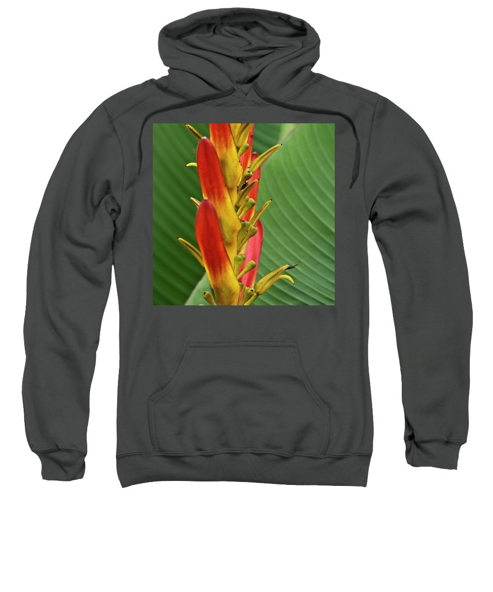 Heliconia Sweatshirt featuring the photograph Heliconia by Heiko Koehrer-Wagner