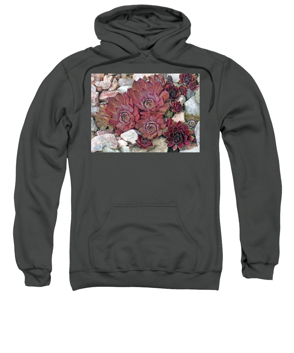 Landscape Sweatshirt featuring the photograph Hens And Chickens by Steve Karol