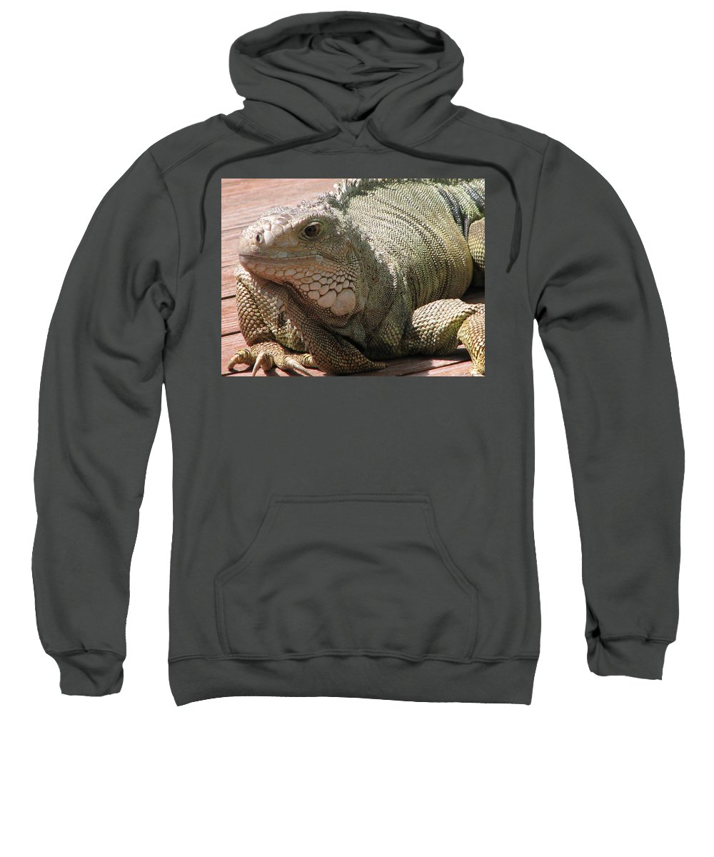 Iguana Sweatshirt featuring the photograph Here Leezard Leezard by Stacey May
