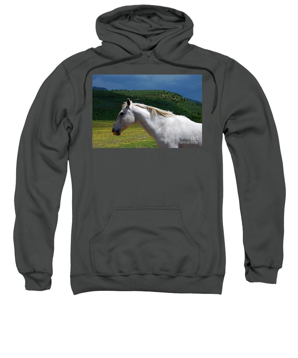Horse Sweatshirt featuring the photograph Hero's Horse-colorful Background by Bruce Chevillat