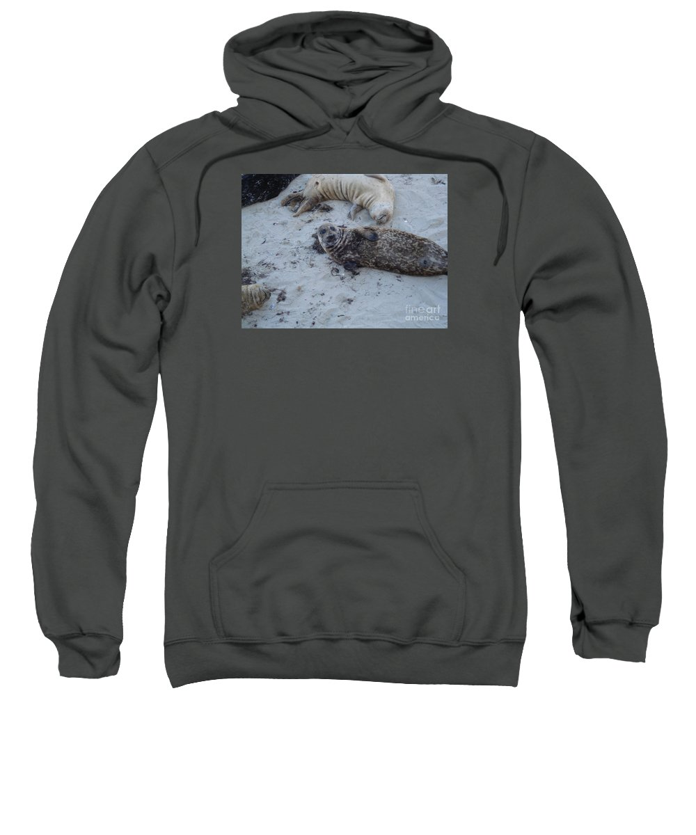 Seals Sweatshirt featuring the photograph Hey Guys by Madilyn Fox