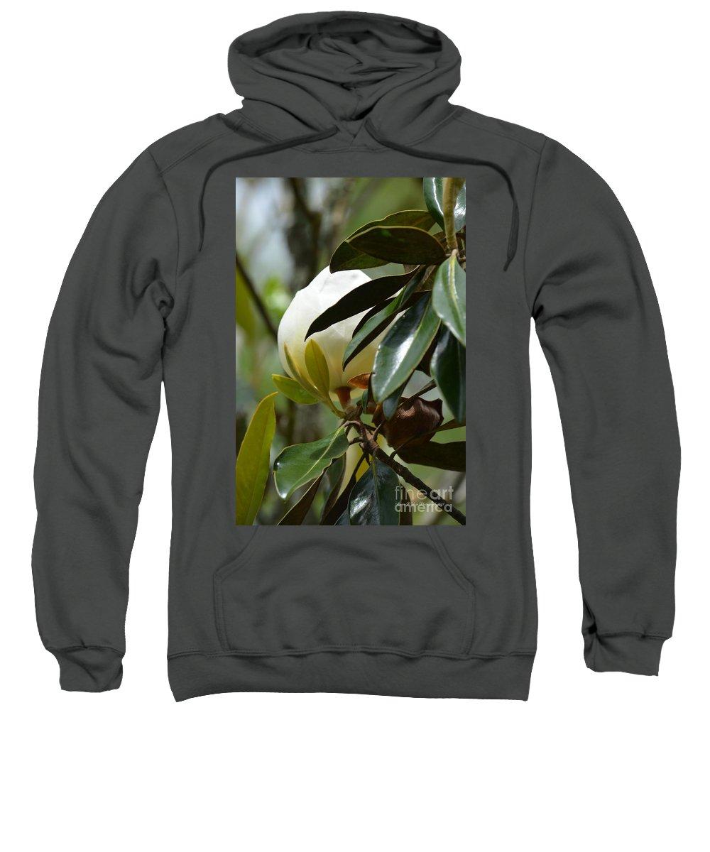 Hidden Beauty Sweatshirt featuring the photograph Hidden Beauty by Maria Urso