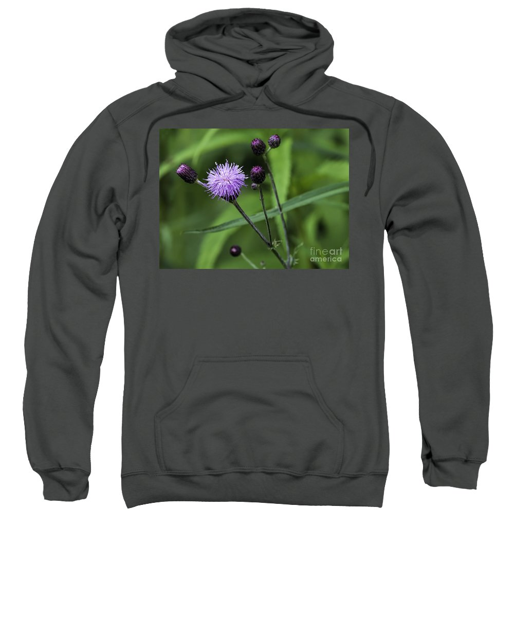 Hill's Sweatshirt featuring the photograph Hill's Thistle Flower And Buds by Les Palenik
