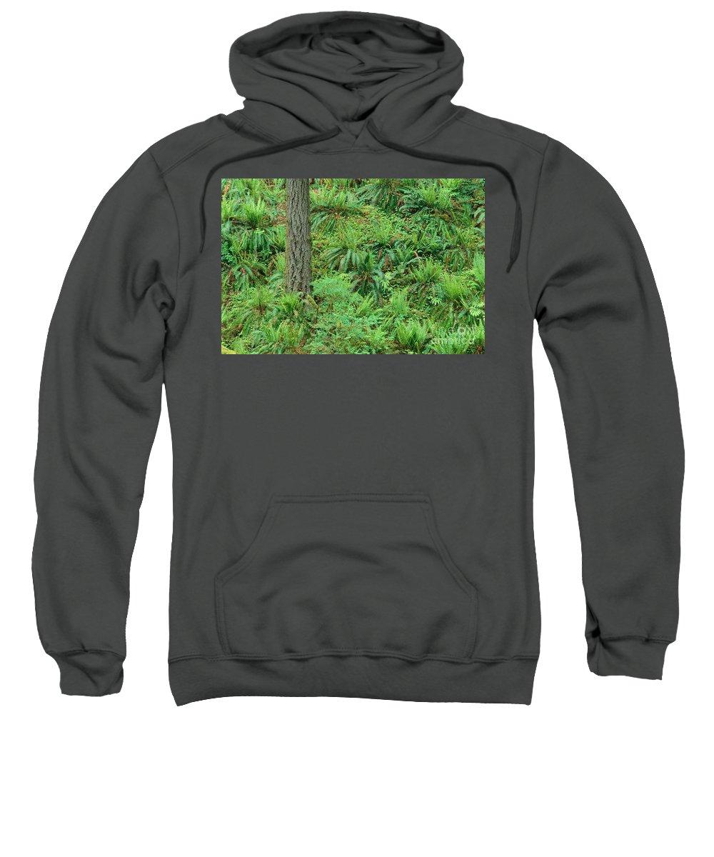 Brush Sweatshirt featuring the photograph Hillside Ferns by Greg Vaughn - Printscapes