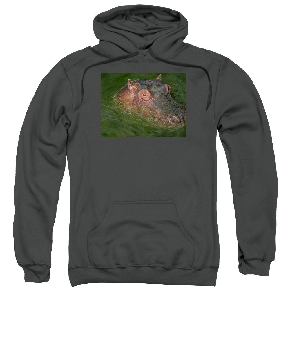 Hippo Sweatshirt featuring the painting Hippo by Edmund Price