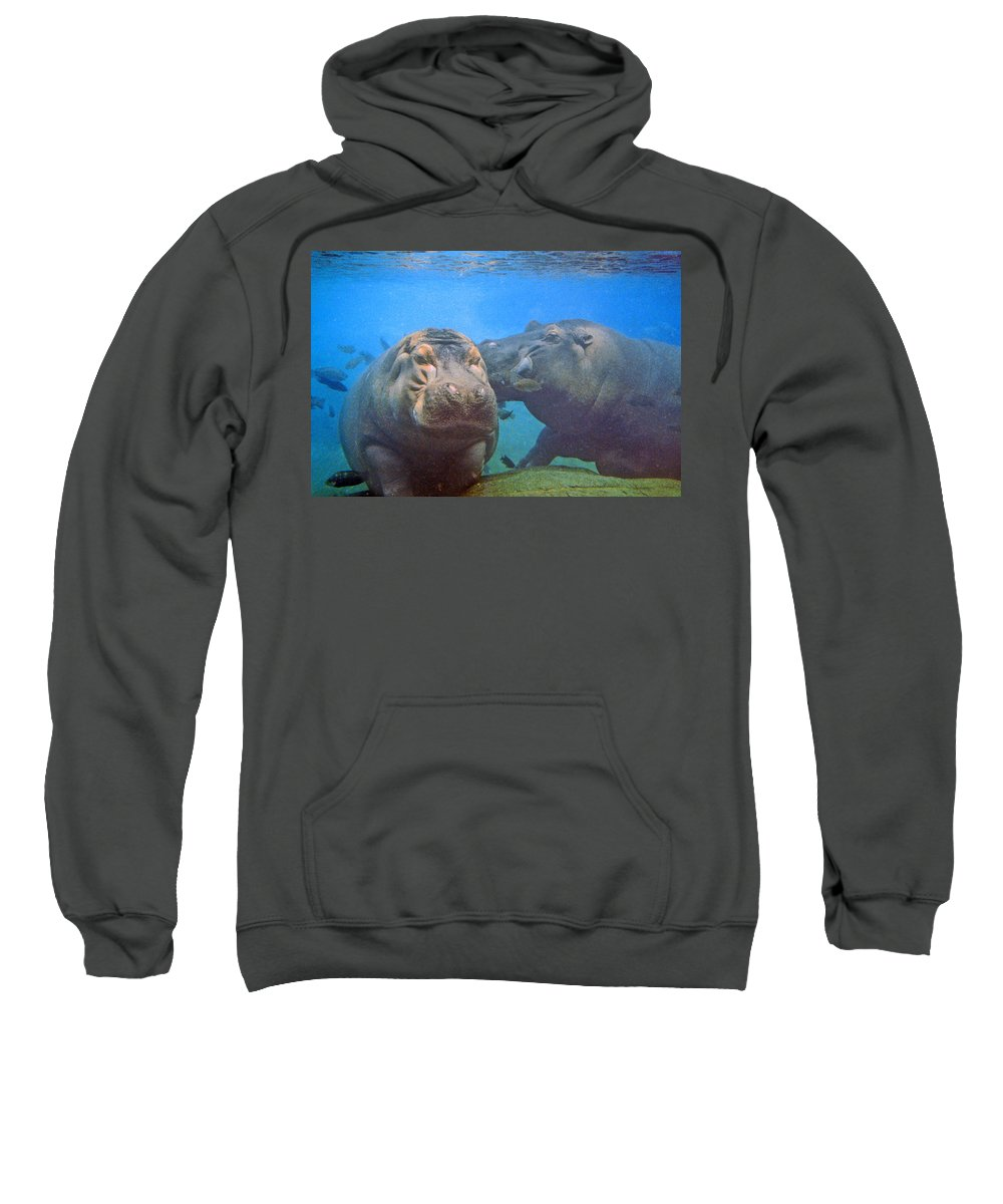 Animals Sweatshirt featuring the photograph Hippos In Love by Steve Karol