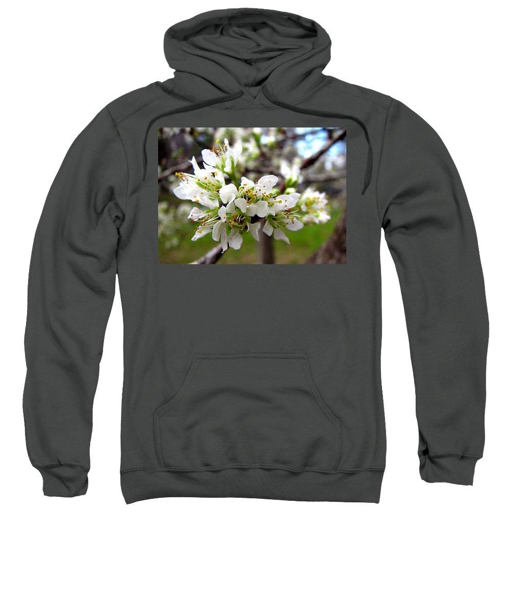 Hog Plum Sweatshirt featuring the photograph Hog Plum Blossoms by J M Farris Photography
