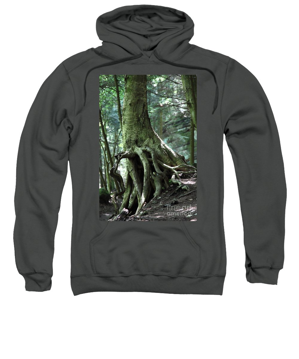 Trees Sweatshirt featuring the photograph Hold On To Me. by Amanda Barcon