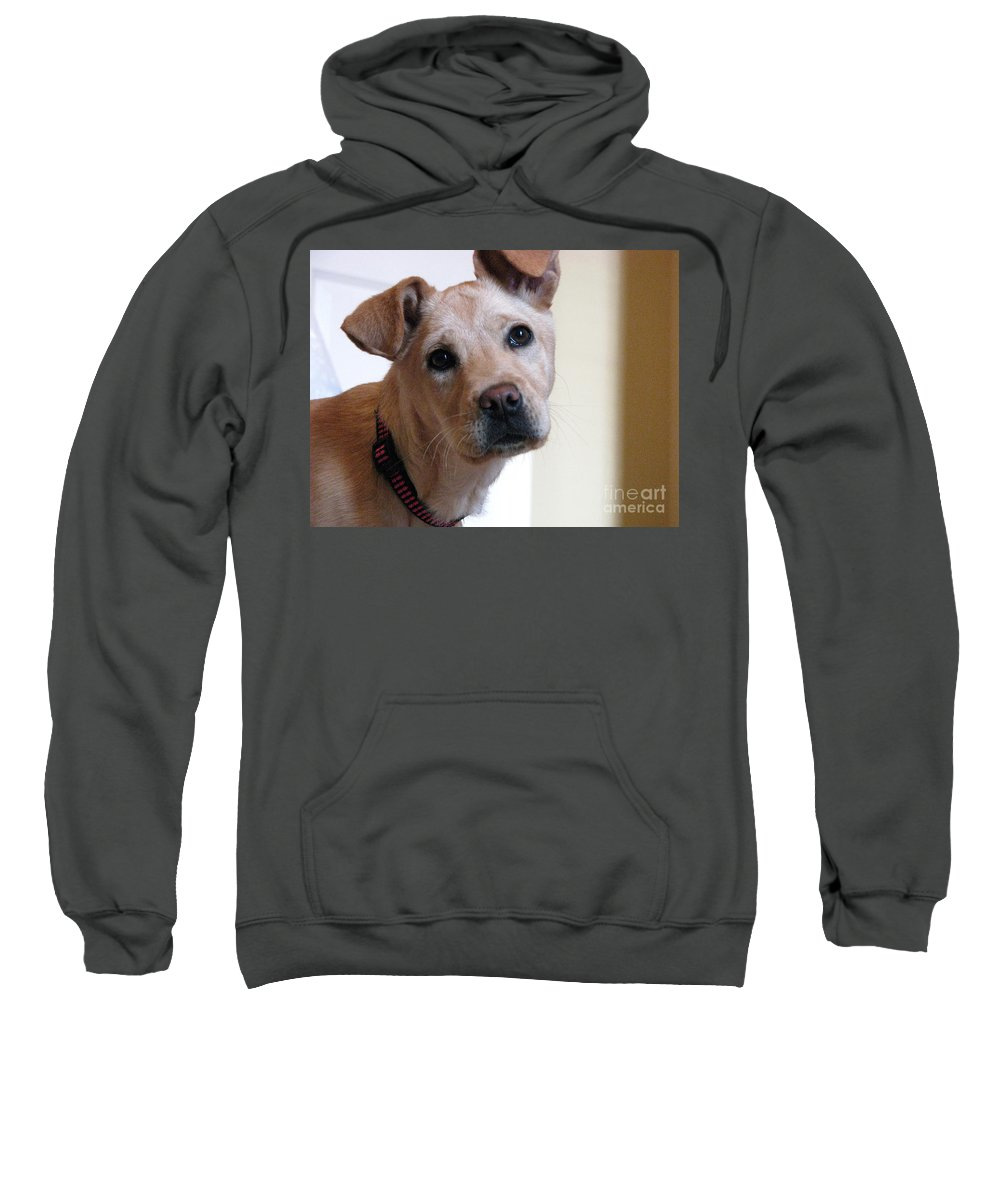 Dog Sweatshirt featuring the photograph Honey by Amanda Barcon