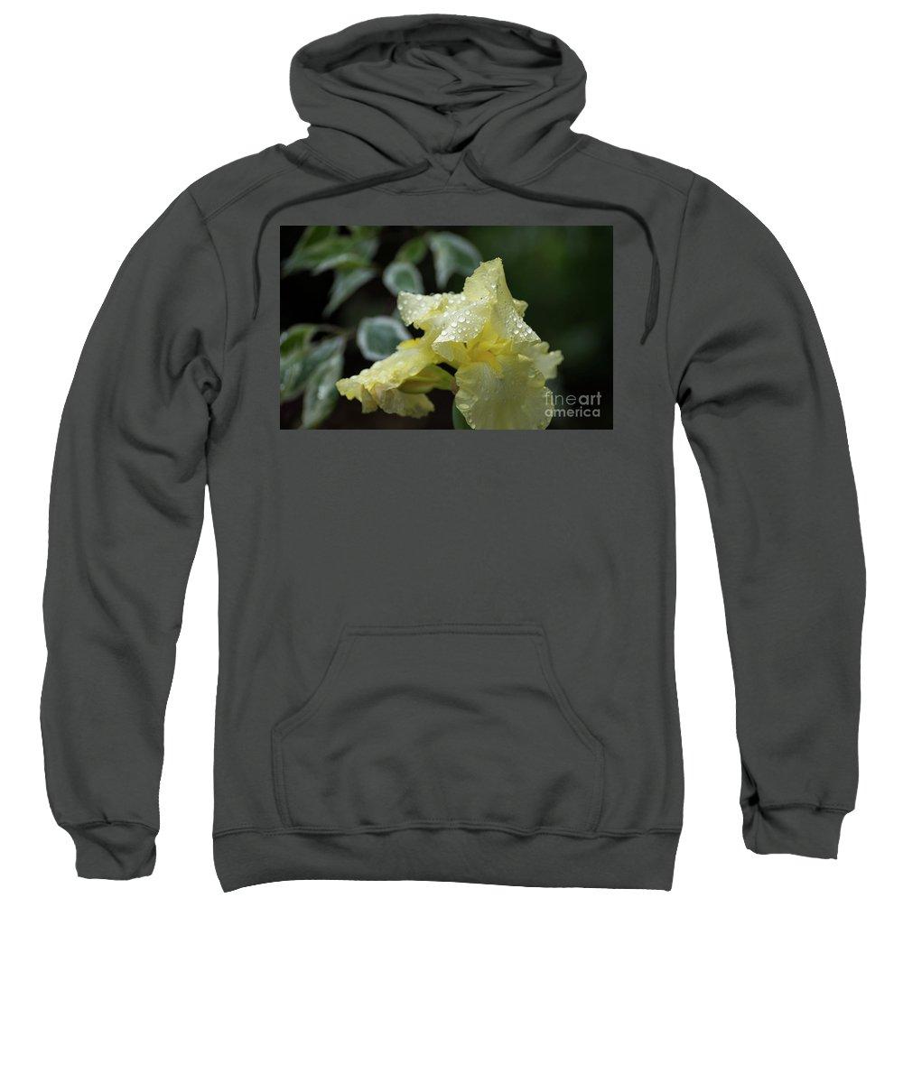 Iris Sweatshirt featuring the photograph Hooded Iris by Carol Lloyd