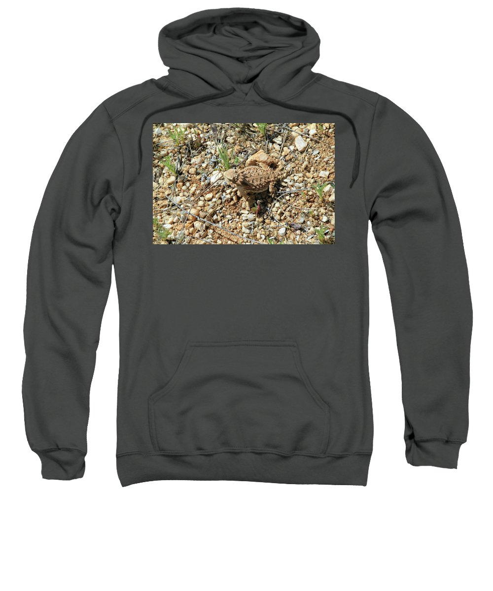 Sweatshirt featuring the photograph Horned Lizard by Kevin Mcenerney