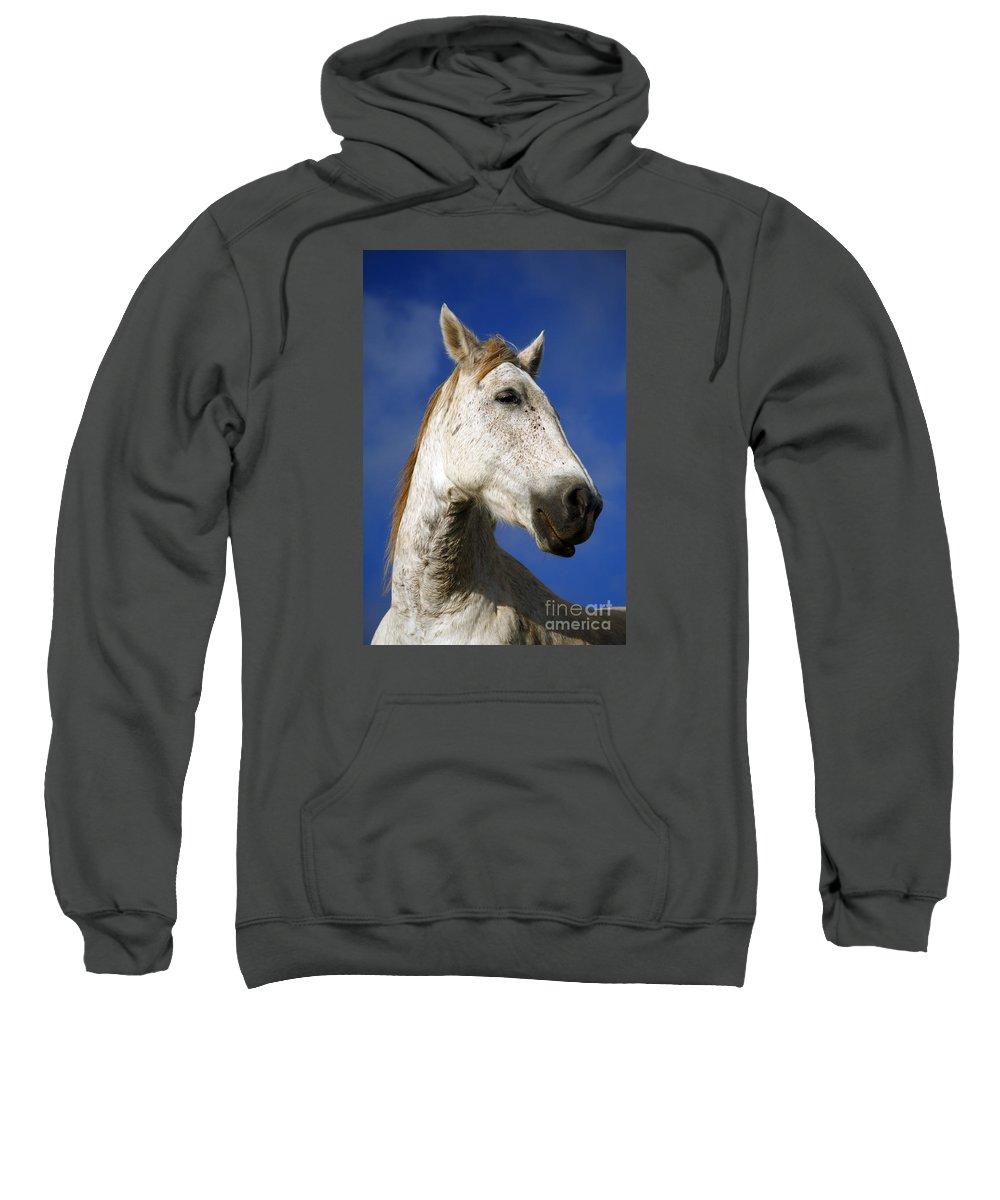 Animals Sweatshirt featuring the photograph Horse Portrait by Gaspar Avila