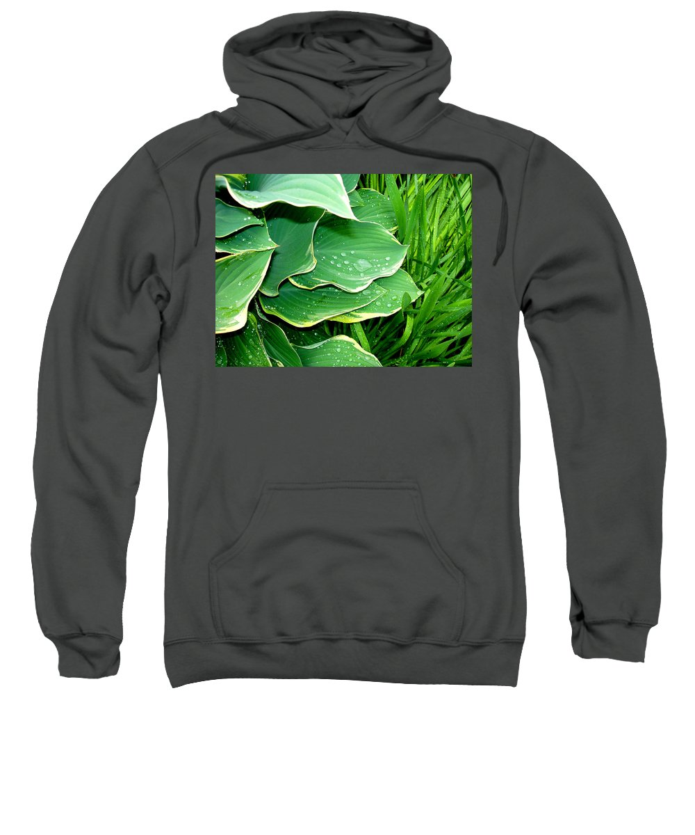 Hostas Sweatshirt featuring the photograph Hosta Leaves And Waterdrops by Nancy Mueller