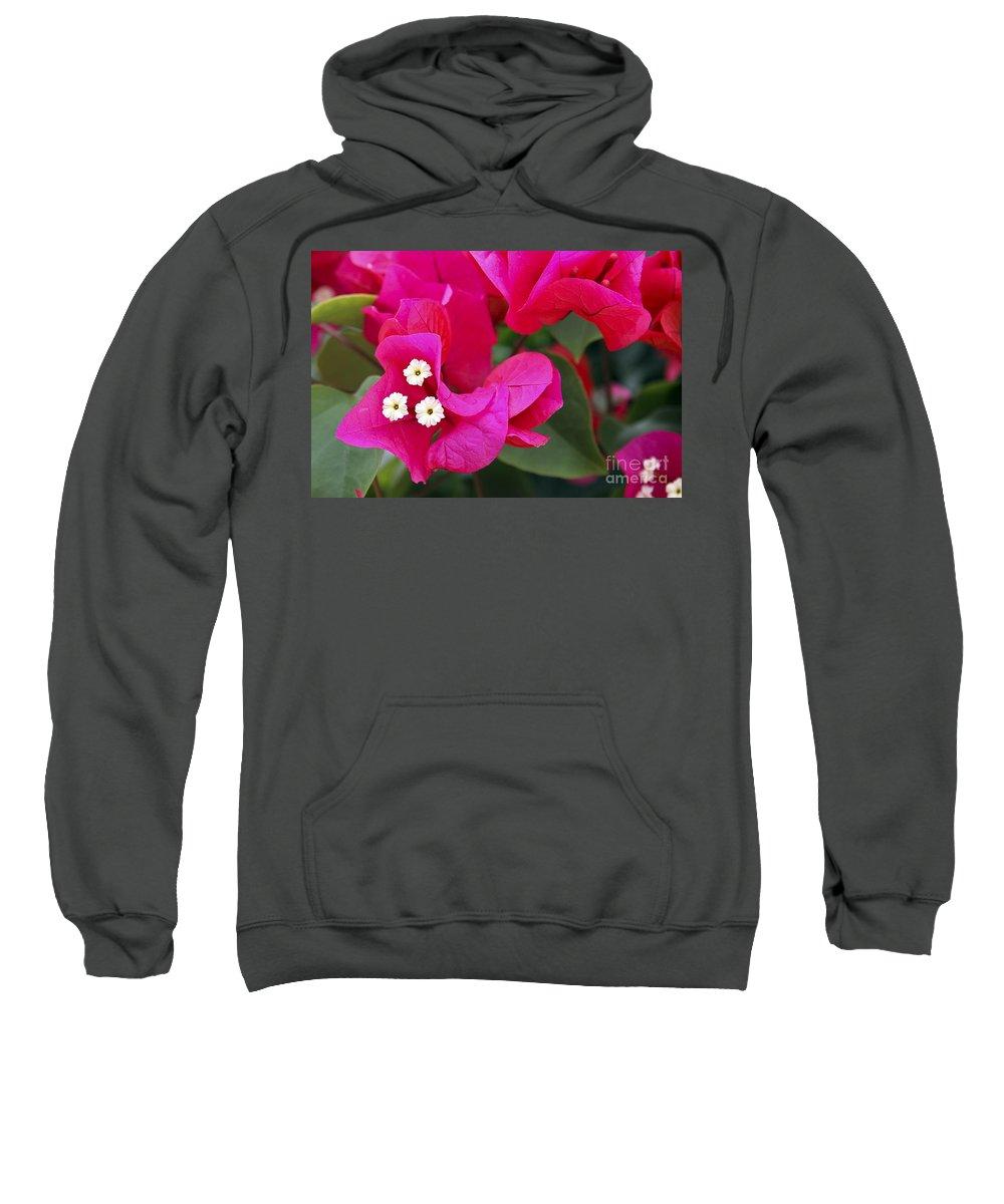 Flower Sweatshirt featuring the photograph Hot Pink Bougainvillea by Teresa Zieba