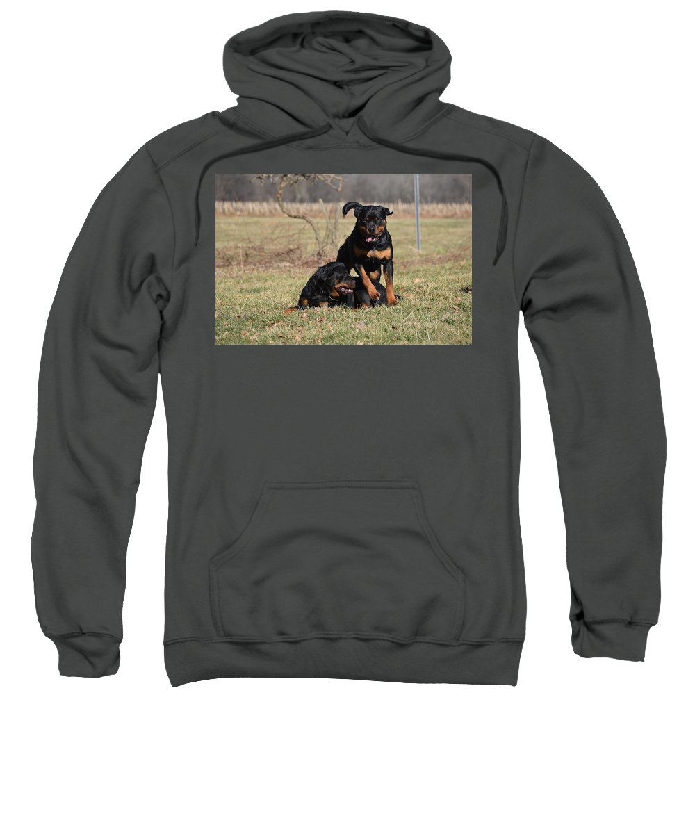 Rottweiler Sweatshirt featuring the photograph Hot Rot by Tammy Milligan